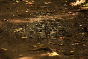dirt trail with bike marks